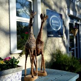 Karoo Giraffes